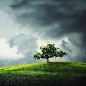 Los arboles absorben contaminantes nocivos y liberan oxígeno limpio para que podamos respirar.