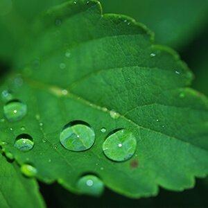Los árboles filtran el agua, previenen inundaciones y hacen posible el ciclo del agua en la Tierra.