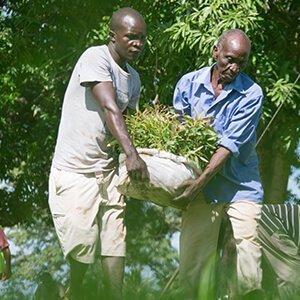 Los árboles proveen de trabajo y comida a muchas comunidades.