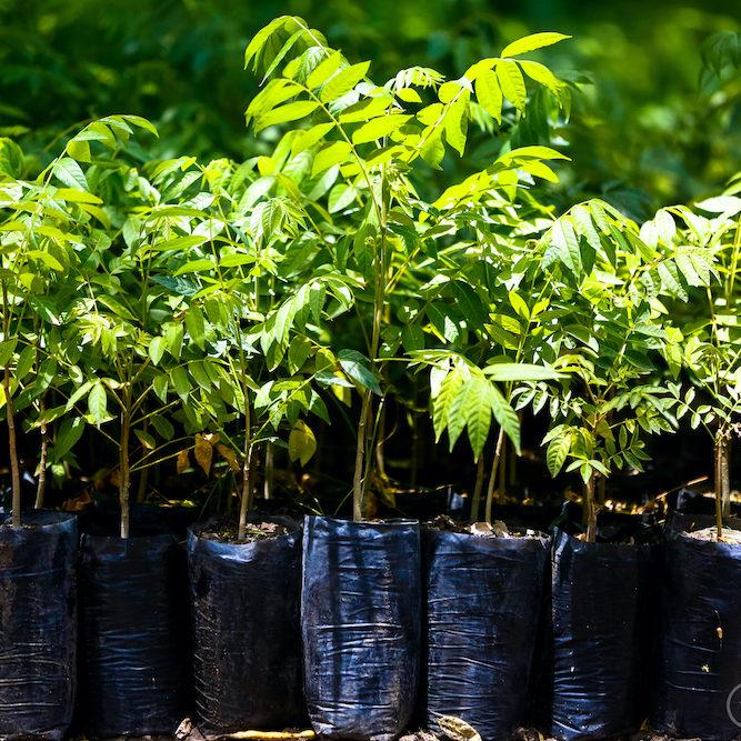 224 árboles plantados en 2020