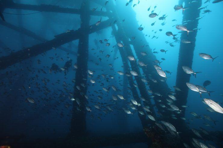 Silueta de plataforma reconvertida en arrecife, Golfo de México.